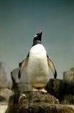 Parque zoológico de Nueva York del pingüino Fotos de archivo