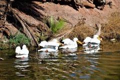 Parque zoológico de Phoenix, centro para la protección de naturaleza, Phoenix, Arizona, Estados Unidos de Arizona imágenes de archivo libres de regalías