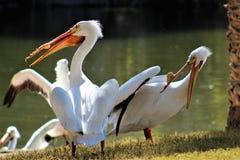 Parque zoológico de Phoenix, centro para la protección de naturaleza, Phoenix, Arizona, Estados Unidos de Arizona imagenes de archivo