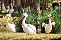 Parque zoológico de Phoenix, centro para la protección de naturaleza, Phoenix, Arizona, Estados Unidos de Arizona imagen de archivo libre de regalías