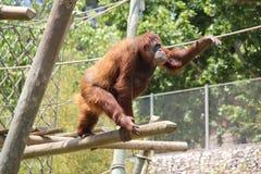 Parque zoológico de Portugal, Lisboa Fotos de archivo libres de regalías