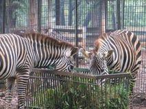 Parque zoológico de Ragunan, Jakarta fotografía de archivo