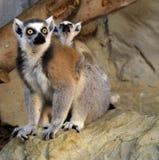 Parque zoológico de Riga Foto de archivo libre de regalías