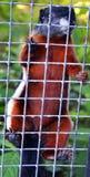 Parque zoológico de Riga Fotos de archivo