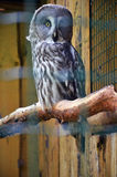Parque zoológico de Riga Imágenes de archivo libres de regalías