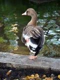 Parque zoológico de Riga Imagenes de archivo