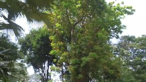 Parque zoológico de Saigon y jardines botánicos almacen de video