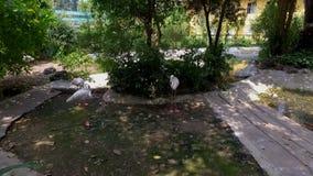 Parque zoológico de Saigon y jardines botánicos metrajes
