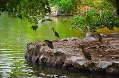 Parque zoológico de Shangai Imágenes de archivo libres de regalías