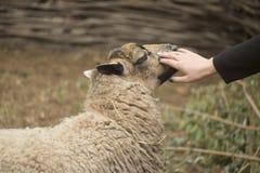 Parque zoológico del parque de naturaleza Fotografía de archivo libre de regalías
