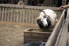 Parque zoológico del parque de naturaleza Imagen de archivo libre de regalías