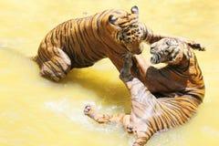 Parque zoológico del tigre, Sriracha Tailandia Foto de archivo libre de regalías