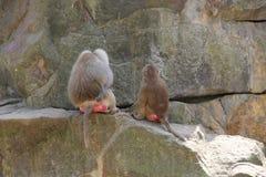 Parque zoológico en Berlín, año 2013 Foto de archivo