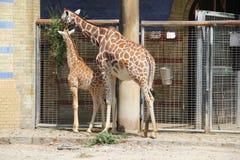 Parque zoológico en Berlín, año 2013 Imagenes de archivo