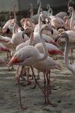 Parque zoológico en Budapest, año 2012 Fotografía de archivo libre de regalías