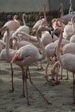 Parque zoológico en Budapest, año 2012 Imágenes de archivo libres de regalías