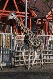 Parque zoológico en Budapest, año 2012 Imagen de archivo libre de regalías