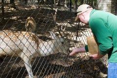 Parque zoológico que acaricia de la cabra Fotos de archivo libres de regalías