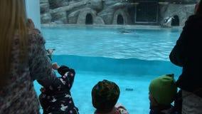 Parque zoológico que visita de la gente y pingüinos de observación de Humboldt que nadan almacen de video