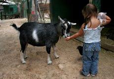 Parque zoológico que acaricia Foto de archivo libre de regalías