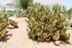 Parquee con el desierto tropical exótico del cactus contra los edificios de piedra blancos en estilo latinoamericano mexicano con fotografía de archivo libre de regalías