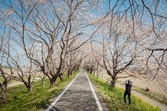 Parquee con la floración hermosa de cerezos y de gente Foto de archivo libre de regalías