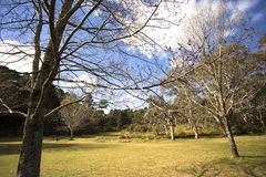 Parquee con los árboles, hierba verde, ramas debajo del cielo azul cerca de Katoomba Sydney Australia Fotos de archivo libres de regalías