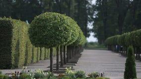 Parquee con los árboles verdes al lado del tiempo de verano del castillo almacen de video
