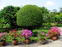 Parquee con los árboles y las flores hermosos en potes Imagen de archivo