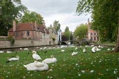 Parquee con los cisnes y los patos cerca del canal de agua en el fondo del puente y de edificios medievales en la ciudad de Bruja Imagenes de archivo