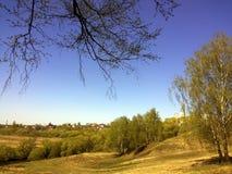 Parquee el paisaje con los árboles, que florecen las primeras hojas jovenes verdes imagen de archivo