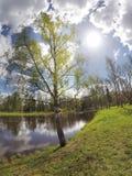 Parquee en el suburbio de St Petersburg, Rusia El abedul doblado sobre el lago Imagen de archivo libre de regalías