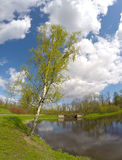 Parquee en el suburbio de St Petersburg, Rusia El abedul doblado sobre el lago Foto de archivo