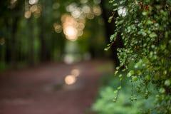Parquee en la luz de la puesta del sol, fondo blurкed natural Fotografía de archivo libre de regalías