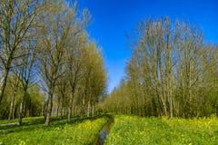 Parquee en los Países Bajos en un día pring soleado Imágenes de archivo libres de regalías