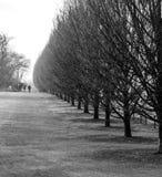 Parquee los árboles con dos personas que caminan abajo de la trayectoria Imagenes de archivo