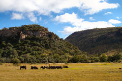 Parques africanos dos animais selvagens imagens de stock