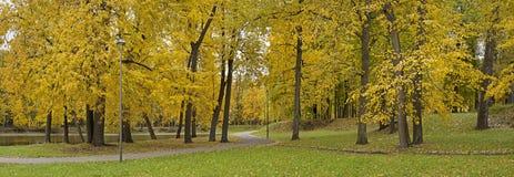 Parques, bosques y árboles en otoño fotos de archivo