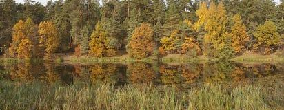 Parques, bosques y árboles en otoño imagen de archivo