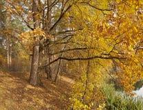 Parques, bosques y árboles en otoño fotografía de archivo