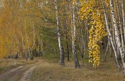 Parques, bosques y árboles en otoño imagen de archivo libre de regalías