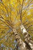 Parques, bosques y árboles en otoño foto de archivo