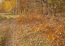 Parques, bosques y árboles en otoño fotos de archivo libres de regalías