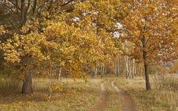 Parques, bosques y árboles en otoño foto de archivo libre de regalías