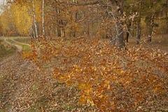 Parques, bosques y árboles en otoño fotografía de archivo libre de regalías