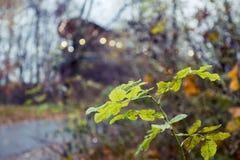 Parques da floresta do outono de Moscou, Rússia detalhes fotos de stock