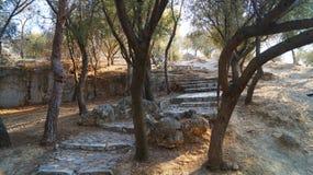 Parques de Atenas Imagens de Stock