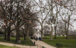Parques de Londres - árboles y ramas imagen de archivo libre de regalías