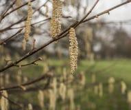 Parques de Londres, Inglaterra - ramos e sementes Imagens de Stock Royalty Free