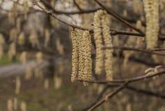 Parques de Londres - ramas en invierno imagen de archivo